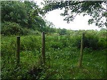 H5173 : Rushy ground, Killycurragh by Kenneth  Allen