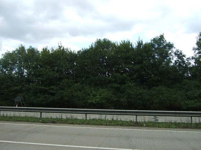 Trees beside the A11
