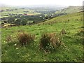 SK0484 : Looking over Otter Brook Valley by Graham Hogg