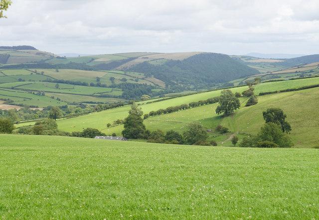 Hillside above Bwlch Farm