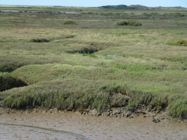Salt marsh near Burnham Deepdale