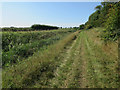 TL6296 : Bridleway by Ten Foot Drain by Hugh Venables