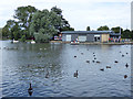 TA1231 : East Park - water birds by Stephen Craven