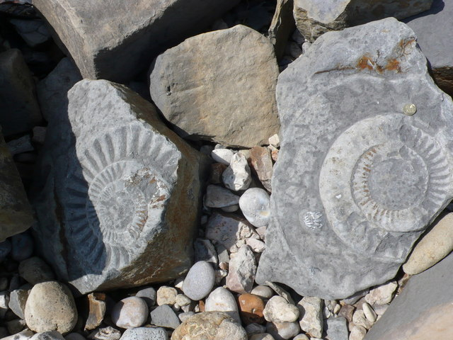 Ammonites Below Pinhay Cliffs