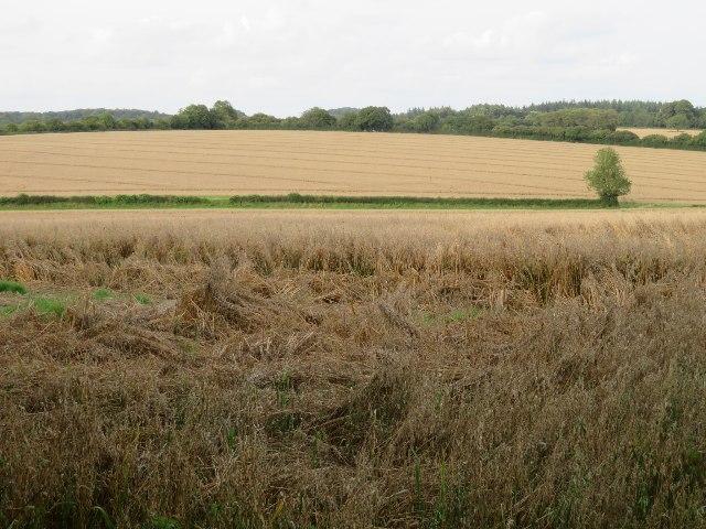 Farmland east of M3 - Dummer