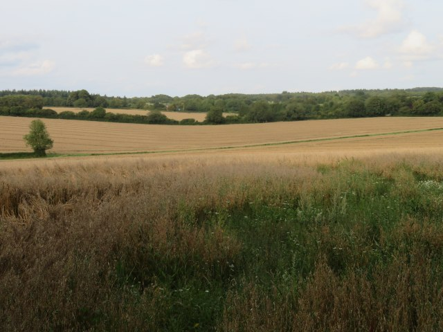 Farmland east of M3 - Dummer