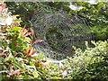 H4672 : Spider's web, Campsie by Kenneth  Allen