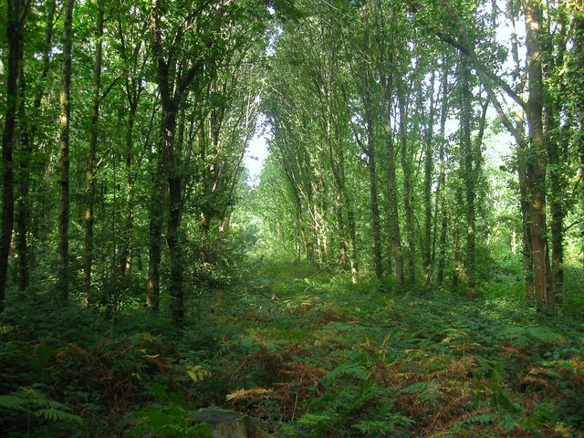 Butlers Copse