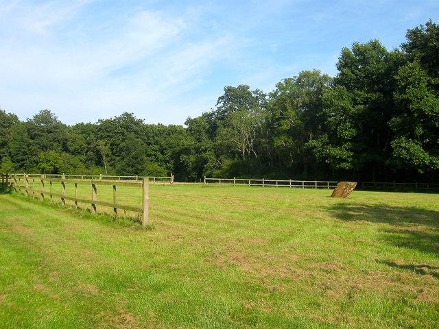 Furze Field