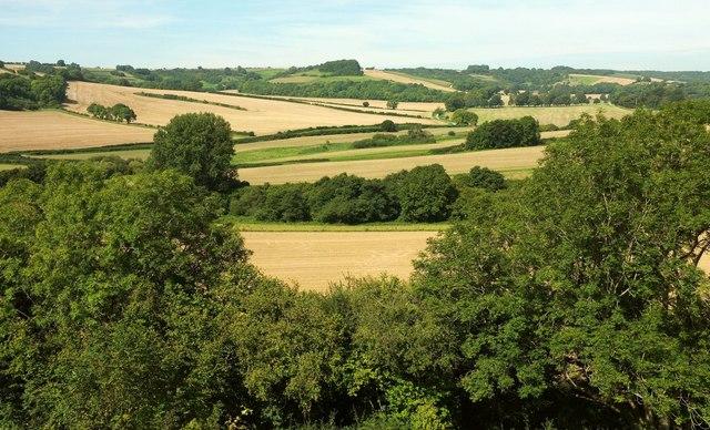 Farmland in the Cerne valley