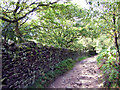 SK2086 : Track at Ladybower Wood by Stephen Burton