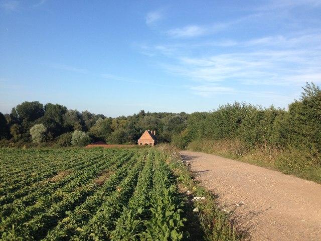 Footpath looking back towards Hollybush Farm, nr Broome