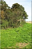 ST6702 : Signpost at path crossroads by Derek Harper