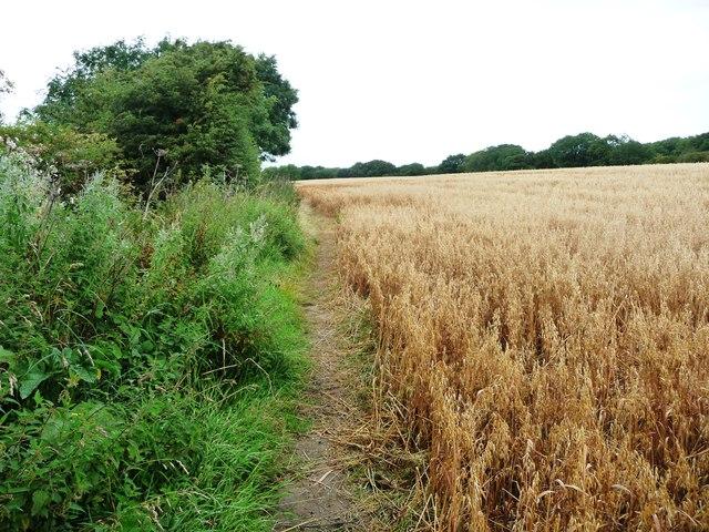 Path heading north at Watness Bank