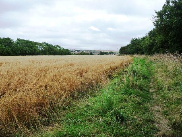 Public footpath on the edge of an oat field