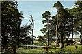 ST6604 : Trees on Little Minterne Hill by Derek Harper