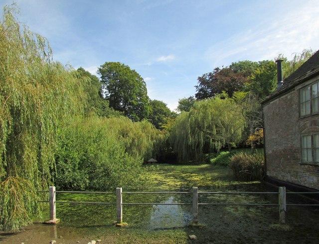 Pond, Cerne Abbas