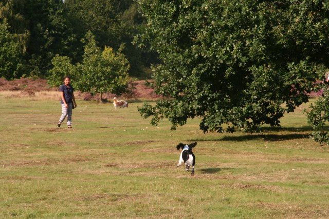 Dog walking on Broome Heath