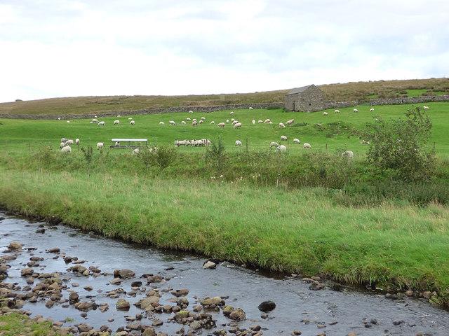 Sheep grazing at Gunnersfleet