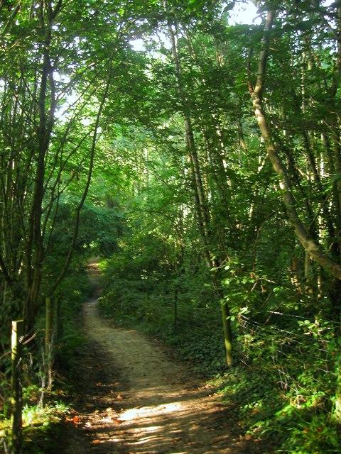 Jewshead Wood