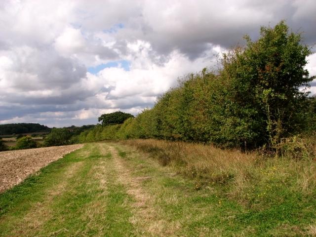 Track skirting crop field