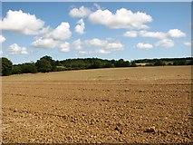 TM3795 : Crop fields east of Wash Lane by Evelyn Simak