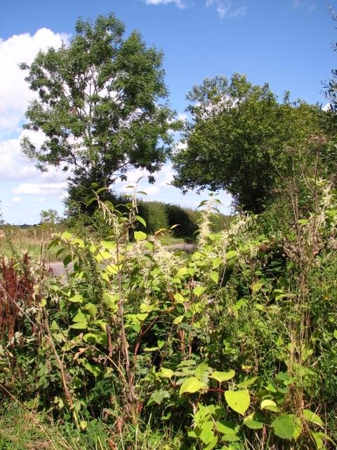 Overgrown ditch beside Wash Lane