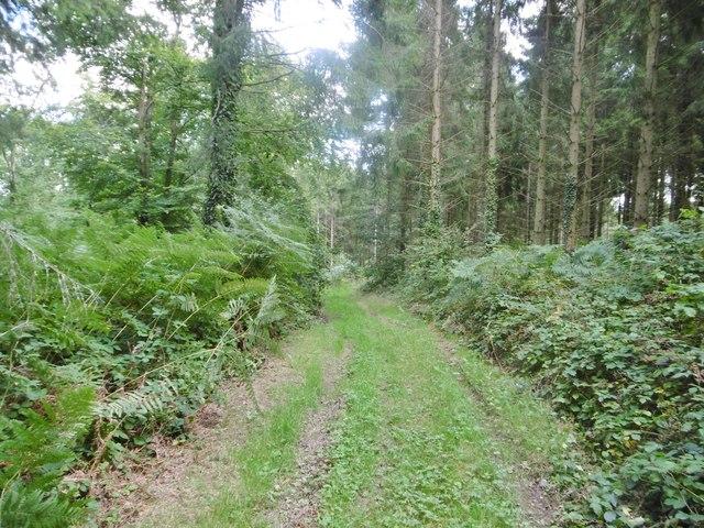 Cranborne, forestry track