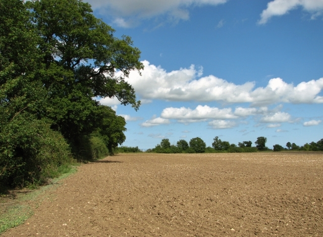 Crop field east of Litchmere Road