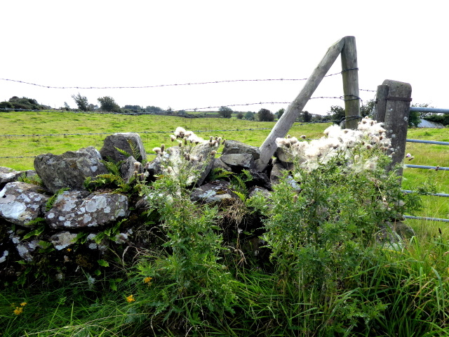 Weeds, Upper Third