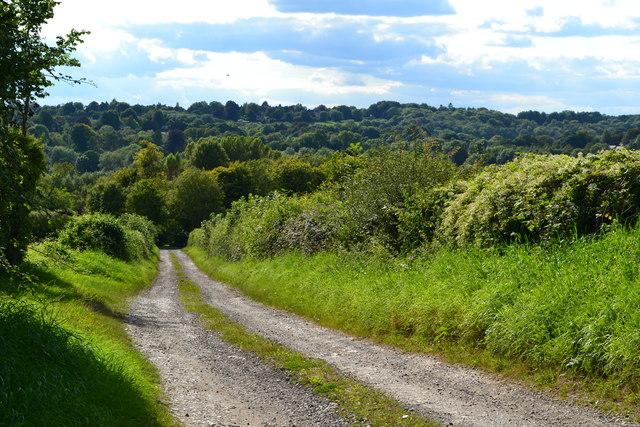 Track downhill from New Barn Farm