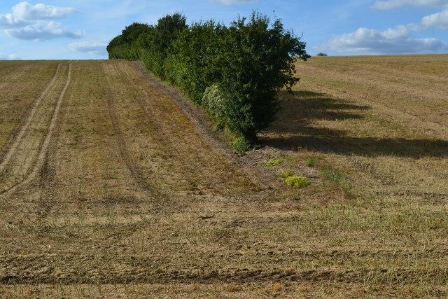 Hedgerow between stubble fields on Twyford Down