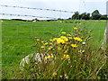 H2981 : Weeds, Kilreal Upper by Kenneth  Allen