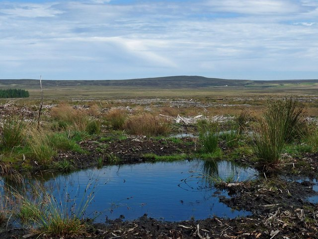 Boggy pool, Stroupster, Caithness