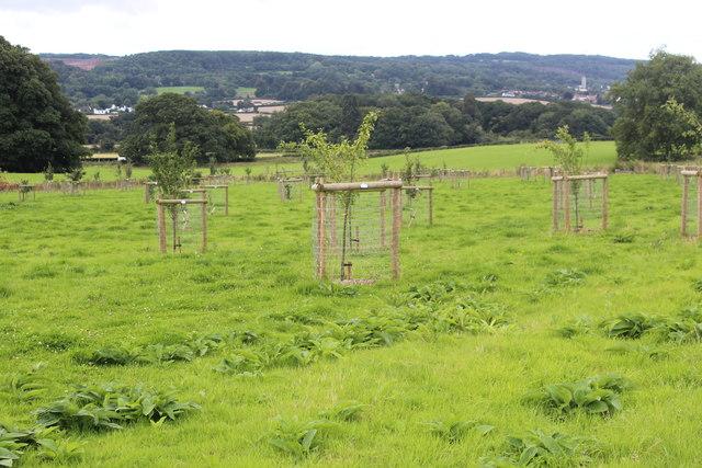 New orchard, Tyntesfield
