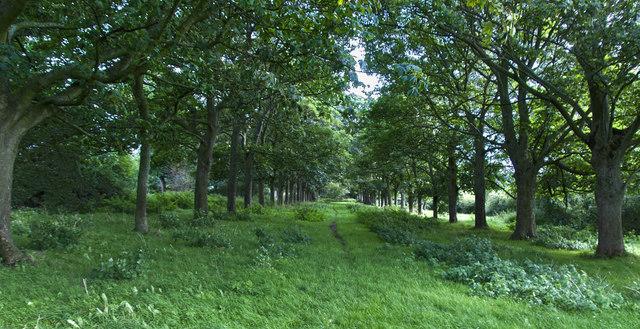 Avenue like footpath