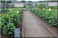 ST5071 : Central path, kitchen garden, Tyntesfield by M J Roscoe