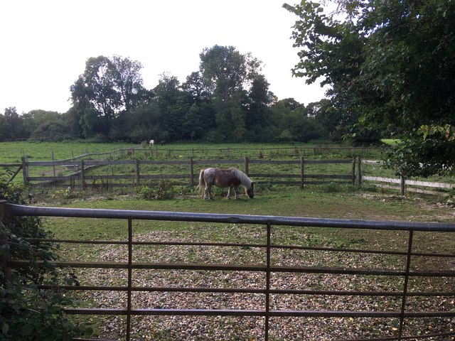 Pony paddocks, Dunt Lane