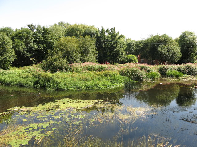 The River Colne south of Thorney Mill