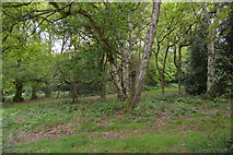 TQ5838 : Tunbridge Wells Common by N Chadwick