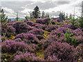 NH4856 : Bealach nan Corr Chambered Cairn by valenta