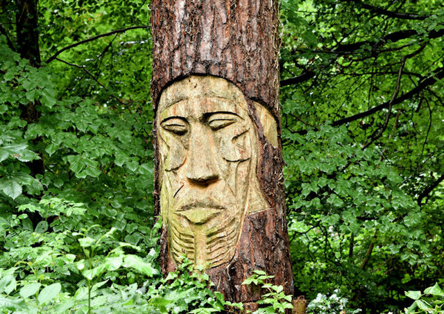 Tree carving, Crawfordsburn Country Park (September 2017)