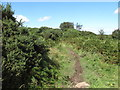 J4976 : Mountain bike track at the Whitespots Country Park by Eric Jones