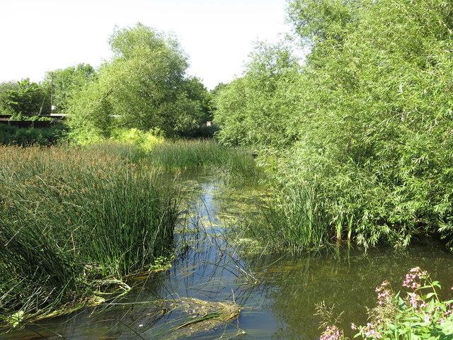 The River Colne north of Cricketfield Road