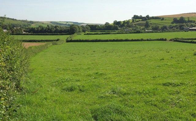Farmland near Cerne Abbas