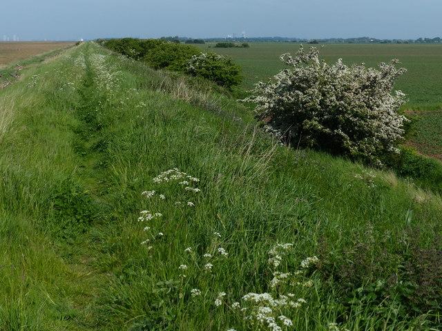Sea defences along the Humber estuary shoreline