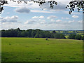 TQ5093 : Avenue Wood, Havering Country Park by Robin Webster
