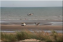 TQ9618 : Monster seagulls at Camber sands by Chris