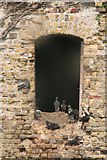 TQ9418 : Pigeon hole: present-day residents of the Martello Tower at Rye Harbour by Chris