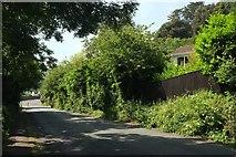 SX9364 : Ilsham Marine Drive, Torquay by Derek Harper